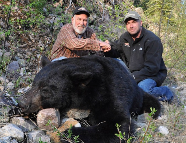 Costal Black Bear